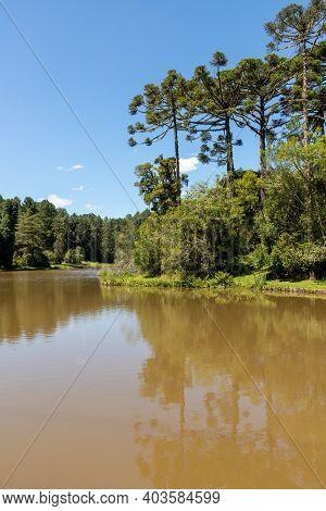 Lake And Araucaria Forest, Canela, Rio Grande Do Sul, Brazil