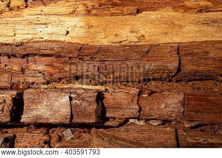 Fallen Log In Forest On Seven Bridges Trail In Fairfield Glade Tn