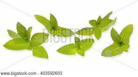 Horizontal Fresh Mint Leaves Banner On White Background