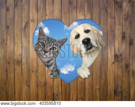 A Cat And A Dog Are Looking Out Through A Heart Shaped Hole In A Wooden Fence.