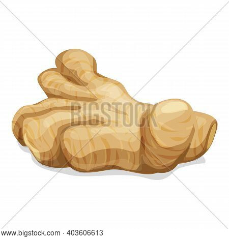 Organic Ginger Icon. Cartoon Of Organic Ginger Vector Icon For Web Design Isolated On White Backgrou