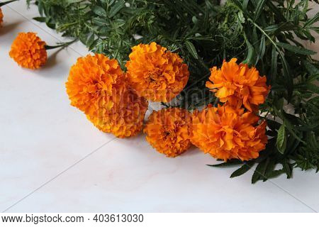 Orange Marigold Flowers, Smelly, Flowers With Velvety Petals