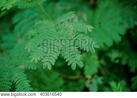 Abstract, Background, Beautiful, Beauty, Bloom, Botany, Bright, Closeup, Color, Environment, Fern, F