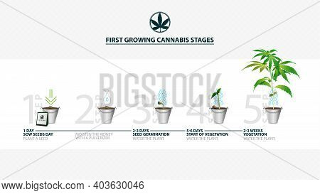 Stages Of Cannabis Seed Germination From Seed To Sprout, The Growing Season Of Cannabis, First Growi
