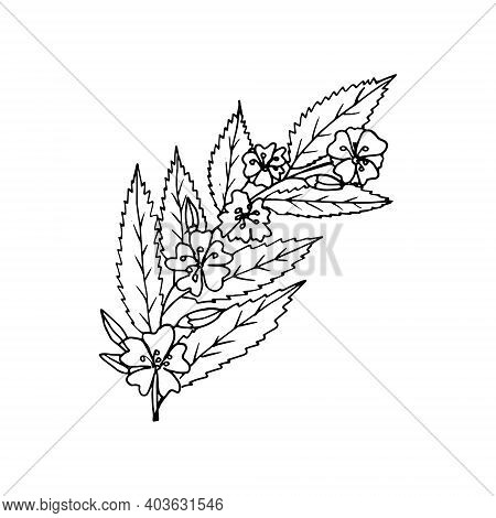 Flowers On A Branch With Leaves Icon, Sticker. Sketch Hand Drawn Doodle Style. Vector Monochrome Min
