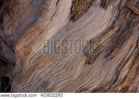 Exfoliating Furrowed Grey Brown Aging Bark Of California Juniper, Juniperus Californica, Cupressacea