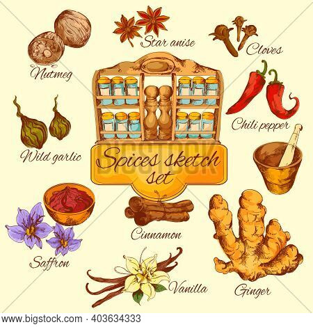 Spices Sketch Colored Set With Chili Pepper Saffron Garlic Anise Isolated Vector Illustration