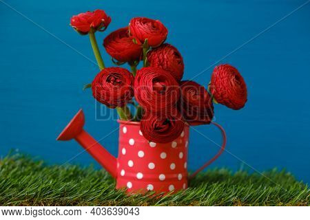 Ranunculus Flowers. Buttercups Bouquet. Floriculture And Horticulture Concept. Red Ranunculus In A R
