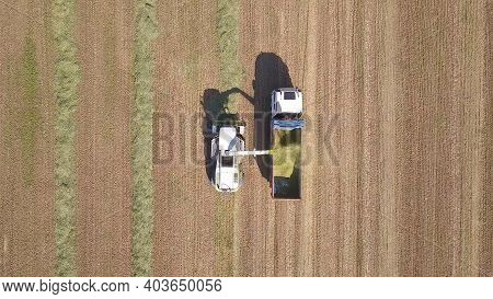 Combine Picking And Shredding Harvested Wheat For Silage And Unloads Onto A Double Trailer Truck, On