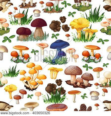 Mushroom Seamless Pattern With Forest Wild Species  So As Suillus Puffball Russula Chanterelle Shiit