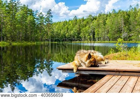 A Long-haired Dog Lies On A Pier By A Lake In The Mountains. Shaggy Dog Sleeps On A Wooden Pier