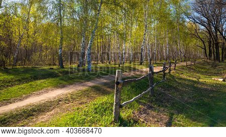 Spring Pastoral Landscape - Path With A Wooden Fence And Birch Trees With Young Leaves Along The Pat