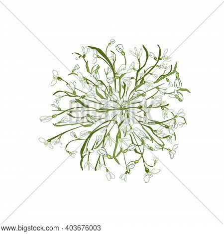 Beautiful Frame Of Hand Drawn Snowdrops Flowers, Green Leaves On White. Spring Flowers Snowdrops Per