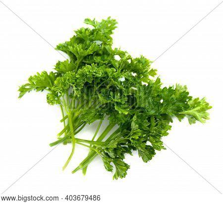 Parsley Or Garden Parsley (petroselinum Crispum) On White Background