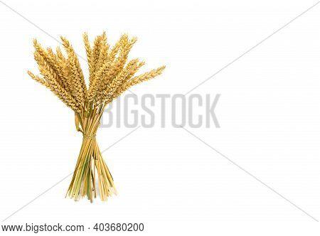 Sheaf Of Wheat Ears On A White Background.