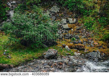 Beautiful Mountain Creek Among Rich Flora In Forest. Atmospheric Landscape With Mosses Near Small Ri