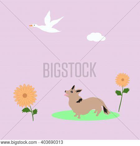 Flying Wild Duck, Little Corgi Looks At A Bird, Daisies - Vector. Spring Mood. Life Of Animals .