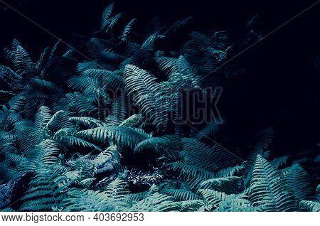 Tidewater Green Fern For Background. Beautiful Monochrome Leaves For The Background. Tidewater Green