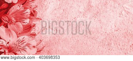 Layout For A Greeting Card. A Bouquet Of Beautiful Red Orchids On A Light Background. Mocap, Blank,