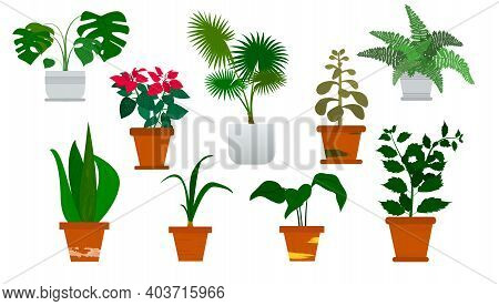 Vector Isolated Set Various Indoor Ornamental Plants. Most Common And Popular Houseplants.