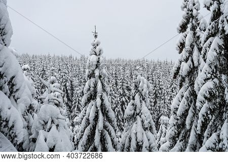 Trees Covered By New Snow. Winter Fairytale Landscape. Idyllic Winter Time In Jizera Mountains, Czec