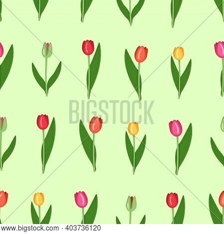 Set Of Tulips Of Different Colours - Red, Yellow, Pink, Green. Trendy Vector Illustration Of Bright