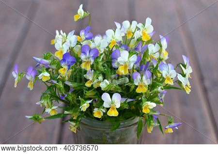 Bouquet Of Blooming Fragrant Wild Pansy Or Viola Tricolor