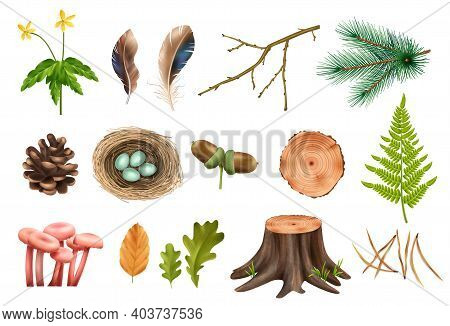 Realistic Botanical Wooden Forest Set With Isolated Icons Of Cones And Flowers With Leaves And Mushr