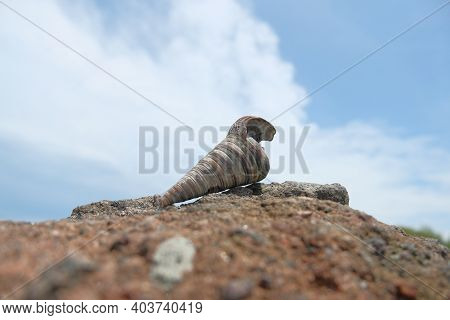Hermit Crab Shell On Rock, Isolated Hermit Crab Shell