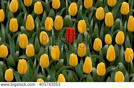 Unique Different Flower Stands Out, Many Yellow, One Red. Vector Realistic Illustration. Special One