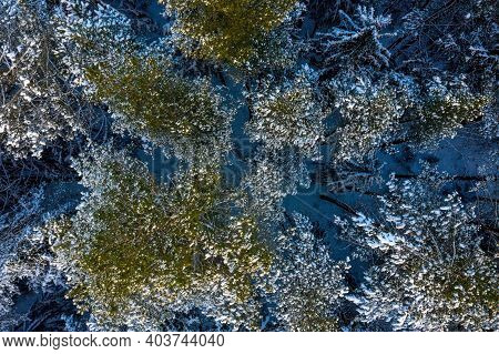Aerial View Of A Winter Snow-covered Pine Forest. Winter Forest Texture. Aerial View. Aerial Drone V