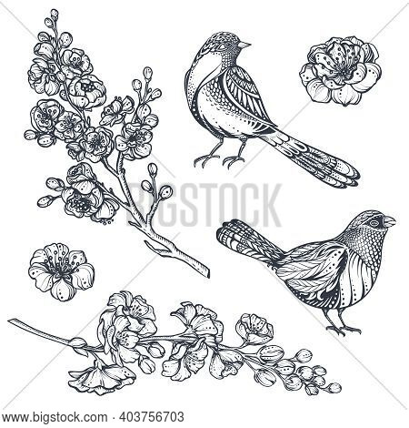 Vector Collection Of Hand Drawn Sakura Flowers, Cherry Tree Branches And Birds.