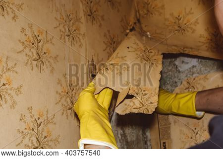 Removing Old Wallpaper Repairs Walls Gloves Repair Worker
