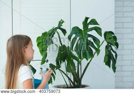 A Little Girl Of 7 Years Old Splashes Water From A Bottle On A Monstera Plant And Wipes It With A Ra