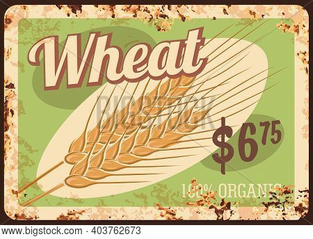 Wheat Metal Rusty Plate, Cereals And Grain Food Price Menu, Vector Vintage Grunge Poster. Natural Or
