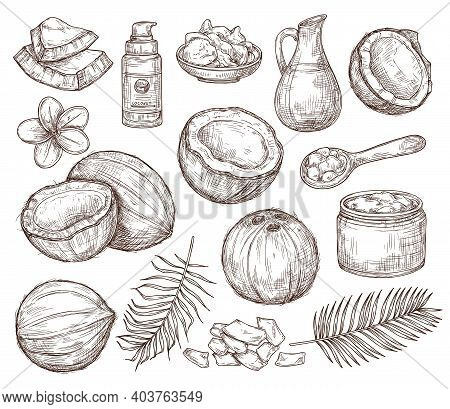 Hand Drawn Coconut. Summer Sketch, Beach Palm Exotic Flowers. Organic Raw Coco Oil And Cosmetics, Dr