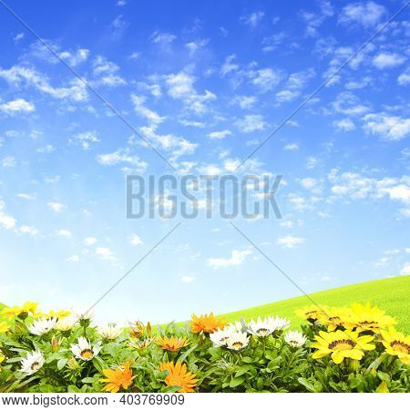First spring wildflowers yellow, white and orange Adonis vernalis (Pheasant's eye). Sunny spring background flowers on flowerbed. Horizontal summer banner with False hellebore flower