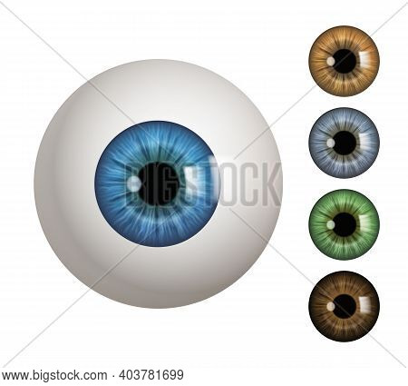 Human Eyeball. People Anatomical Items Macro View Vision 3d Medical Decent Vector Symbols. Eyeball A
