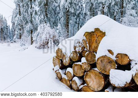 Pine Trees In Forest Covered With Snow On Frosty Evening. Beautiful Stunning Winter Panorama, Winter