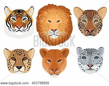 Wild Cat Head Set. Hunting Trophy, Lion And Tiger, Leopard And Snow Leopard, Cheetah Front Face Of W
