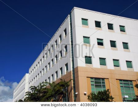 Tropical Office Building In Miami