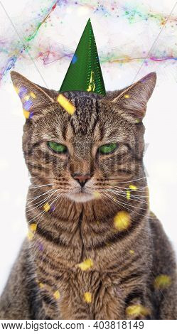 Bored Tabby Cat With A Party Hat On His Head Sitting In Front Of A White Background .animals - Pets