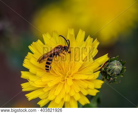 A Close-up Of A Hover Fly On The Flower Of A Plant.