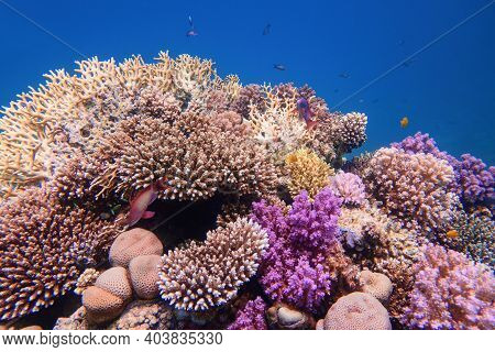 Beautiful Colorful Healthy Coral Reef With Diversity Of Hard Corals
