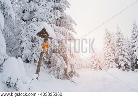 Beautiful Winter Snowy Forest With Cross Country Skiing Trail Sign