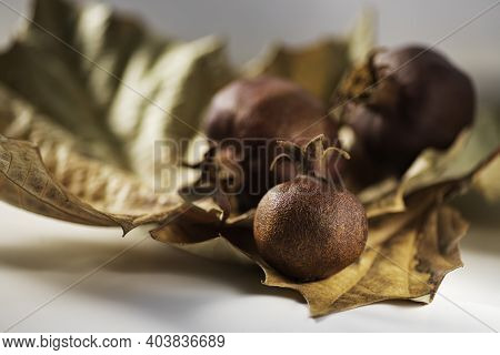 Still Life With Autumn Dry Sycamore Leaves And Dry Pomegranates In Sunlight Closeup On A Blurred Bac