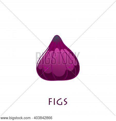 Fig Fruit Vector Design. Fig Vector Illustration.