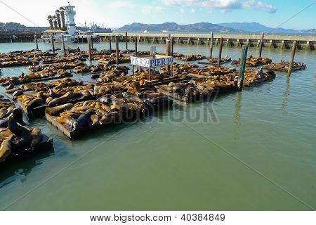 Sea lions at Pier 39 Fisherman's Wharf San Francisco poster