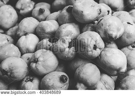 Vintage Black And White Shot Of A Pile Of Quinces
