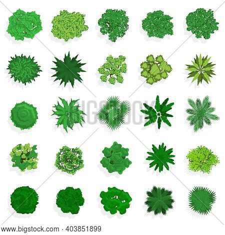Trees Top View. Green Plants, Bushes, Shrubs And Trees For Landscape Or Architectural Design. Nature